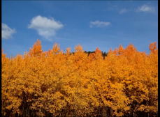 Fall Colors along the Front Range